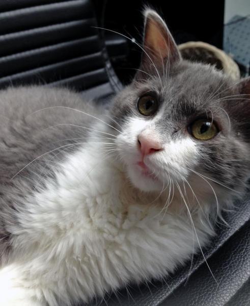 KAID - M - Né le 10/04/2015 - Adopté en janvier 2016