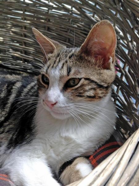 KALISSOU - M - Né le 05/04/2015 - Adopté en février 2016