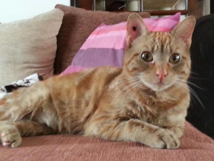 KANSAS  - M - Né le 01/06/2014 - Adopté en avril 2015