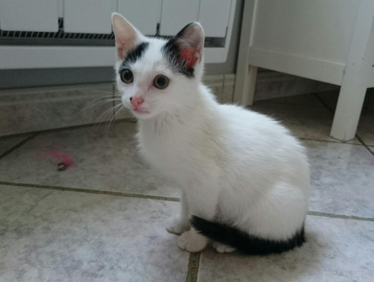 KASIMIR - M - Né le 05/05/2015 - Adopté en octobre 2015