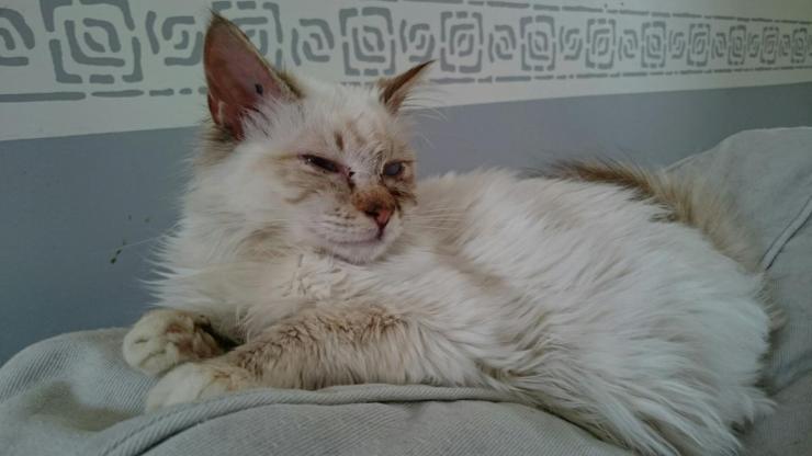 KASSIOPPEE - F - Née le 01/09/2014 - Adoptée en février 2016