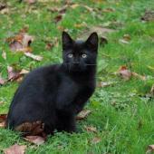 KENZO - M - Né le 09/08/2015 - Adopté en décembre 2015