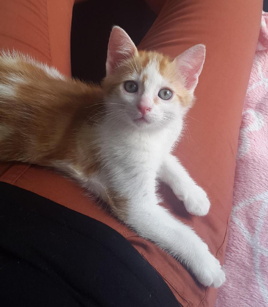 KEVINOU  - M -  Né le 03/06/2015 - Adopté en septembre 2015