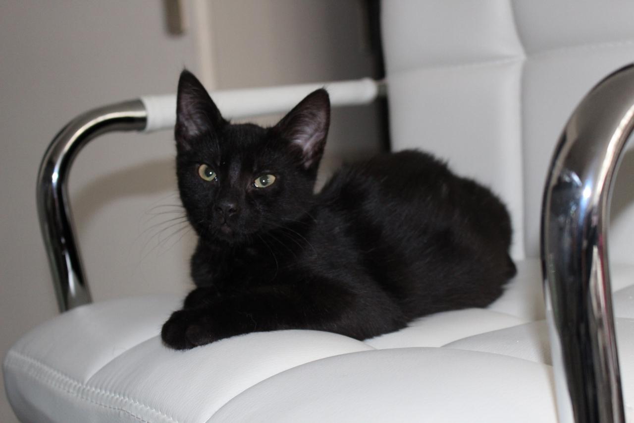 KIKO - M - Né le 23/03/2015 - Adopté en décembre 2015