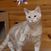 KIMO - M - Né le 10/04/2015 - Adopté en novembre 2015
