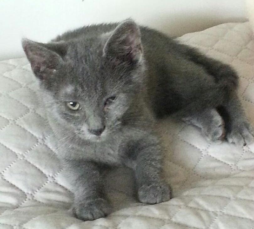 KINOA - M - Né le 01/04/2015 - Adopté en juillet 2015