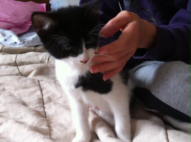 KIRIKOU - M - Né le 07/12/2014 - Adopté en mars 2015