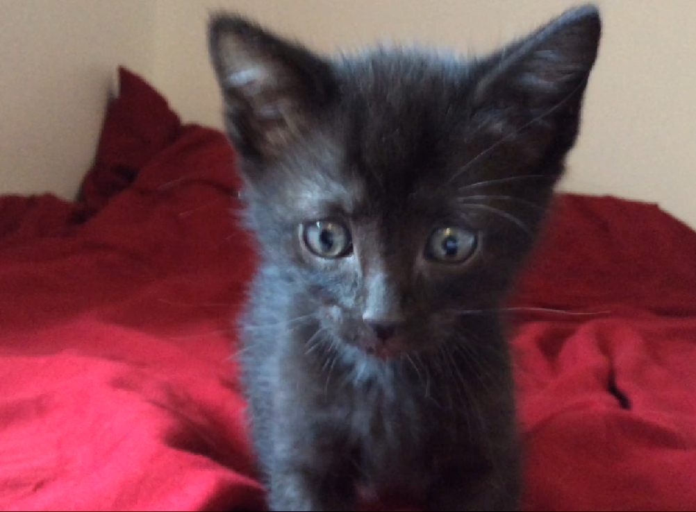 KISSY - F - Née le 15 mars - Adoptée en juin 2015