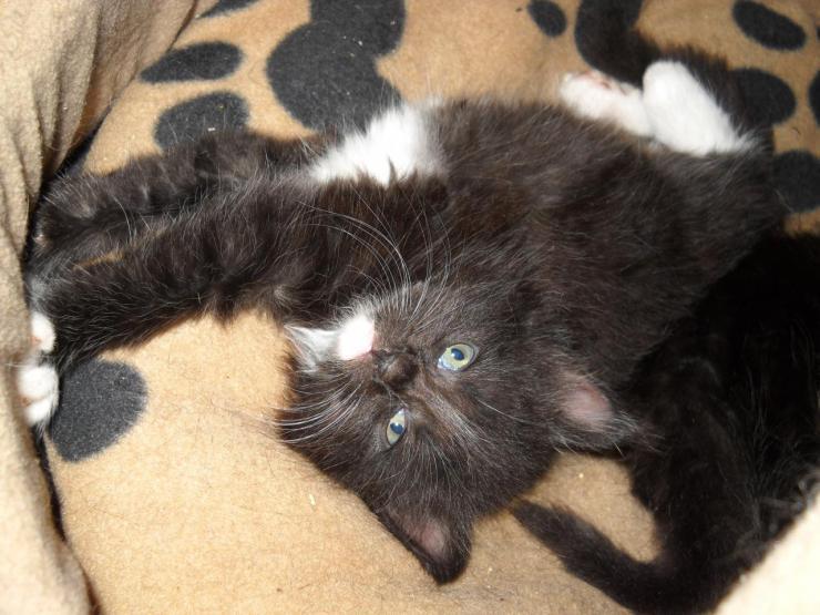 KITKAT - M - Né le 23/03/2015 - Adopté en juillet 2015