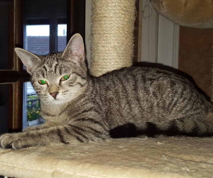 KLIPPIE - F - Née le 15/10/2015 - Adopté en Avril 2016