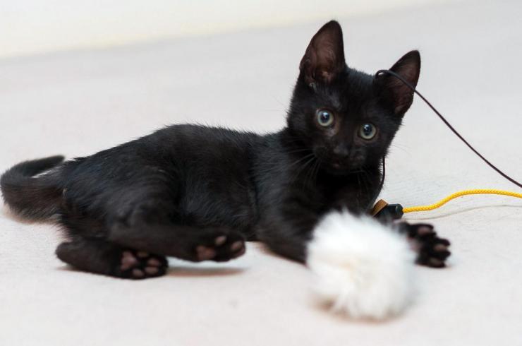 KOKO - M - Né le 10/05/2015 - Adopté en août 2015