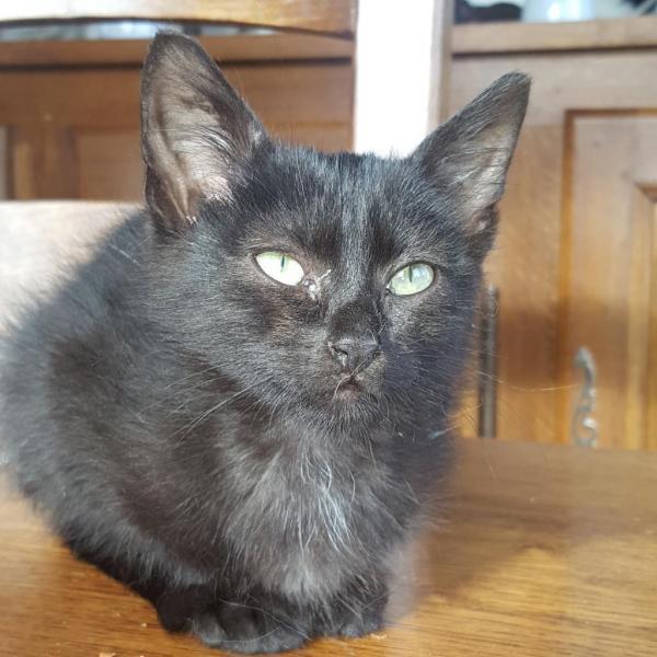 KYO - M - Né le 01/09/2015 - Adopté en février 2016
