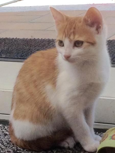 LADY - F - Née le 01/08/2015 - Adoptée en novembre 2015