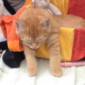 LAZY - M - Né le 01/08/2015 - Adopté en octobre 2015