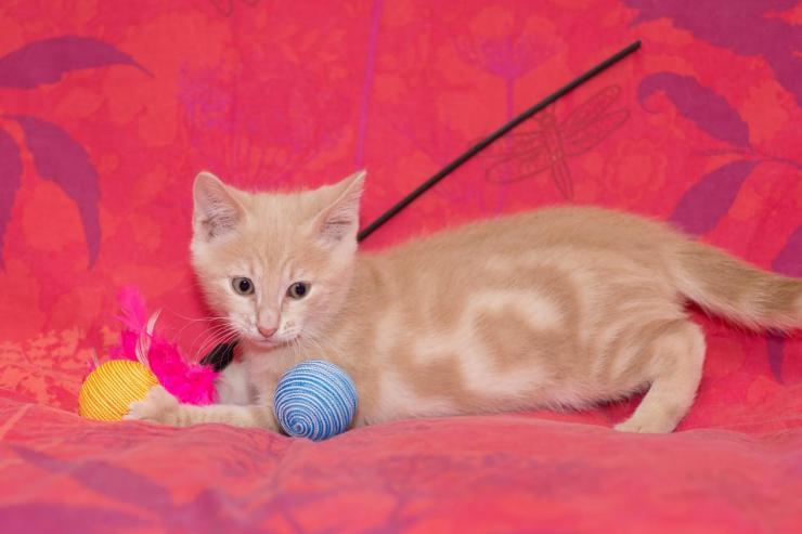 LEO - M - Né le 10/04/2015 - Adopté en août 2015