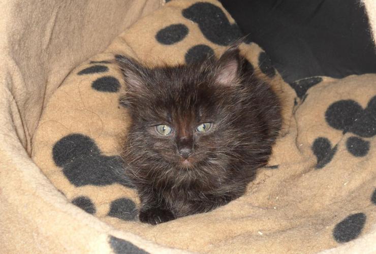 LÉON - M - Né le 23/03/2015 - Adopté en juillet 2015