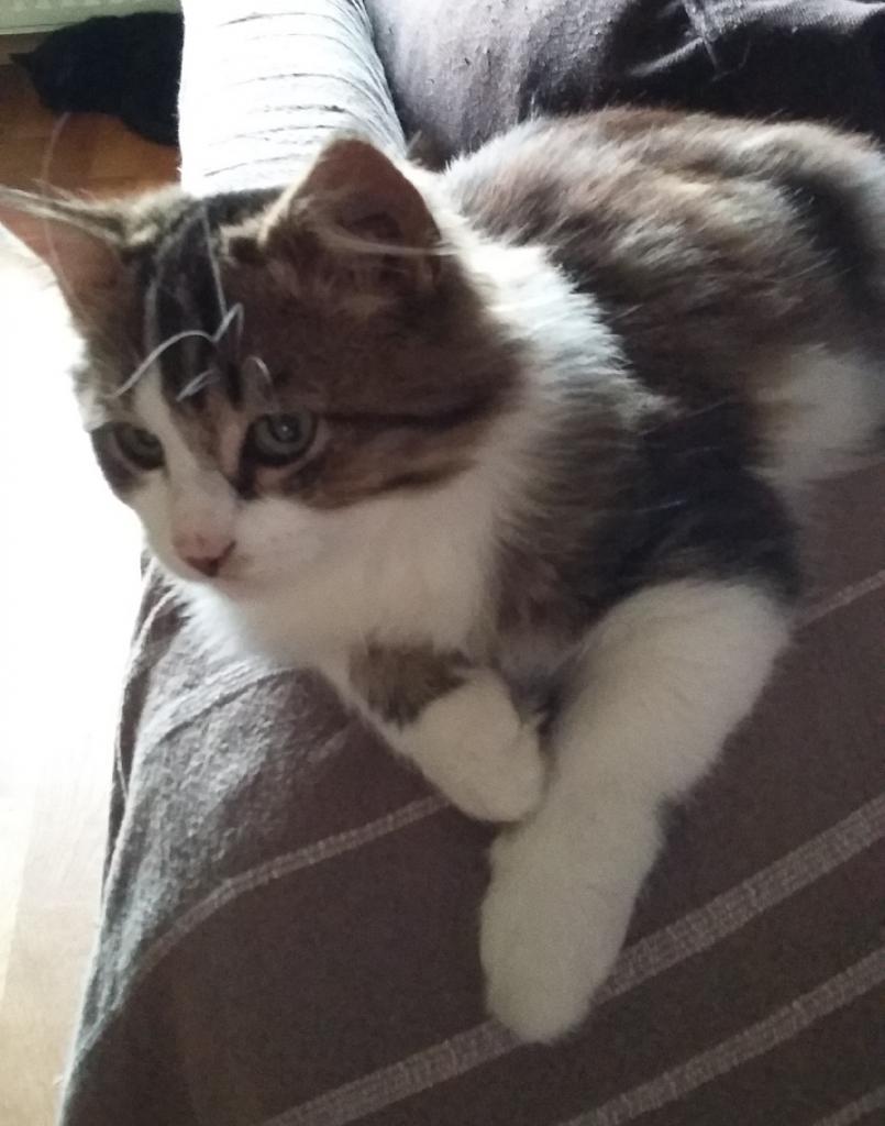 LIAM - M - Née le 15/06/2015 - Adopté en décembre 2015