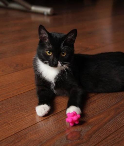 LILITE - F - Née le 05/05/2015 - Adoptée en septembre 2015
