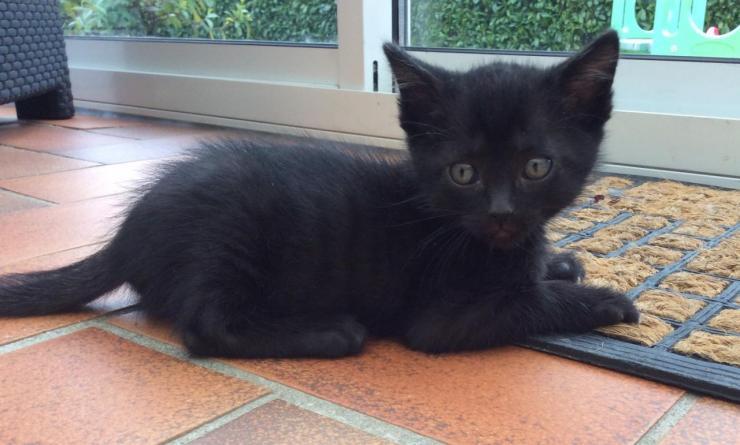 LIPTON - M - Né le 15 mars - Adopté en juin 2015
