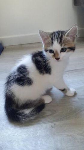 LOKI - M - Né le 05/04/2015 - Adopté en août 2015