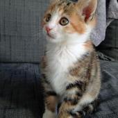 LOLA - F - Née le 05/08/2015 - Adoptée en octobre 2015