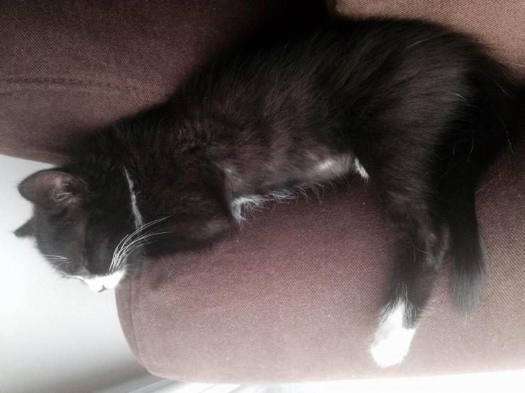 LUCETTE  - F - Née le 10/04/2015 - Adoptée en janvier 2016