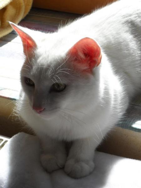 LUCKY - M - Né le 01/04/2014 - Adopté en août 2015