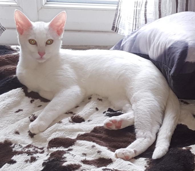 LUIGI - M - Né le 10/06/2015 - Adopté en Mars 2016