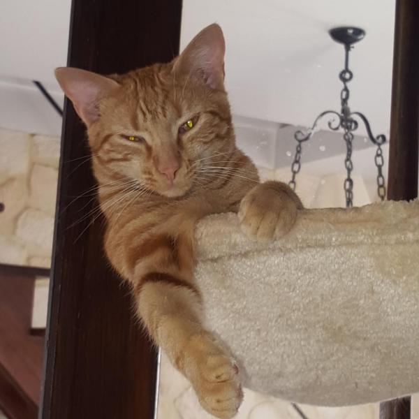 LUPIN - M - Né le 01/04/2015 - Adopté en janvier 2016