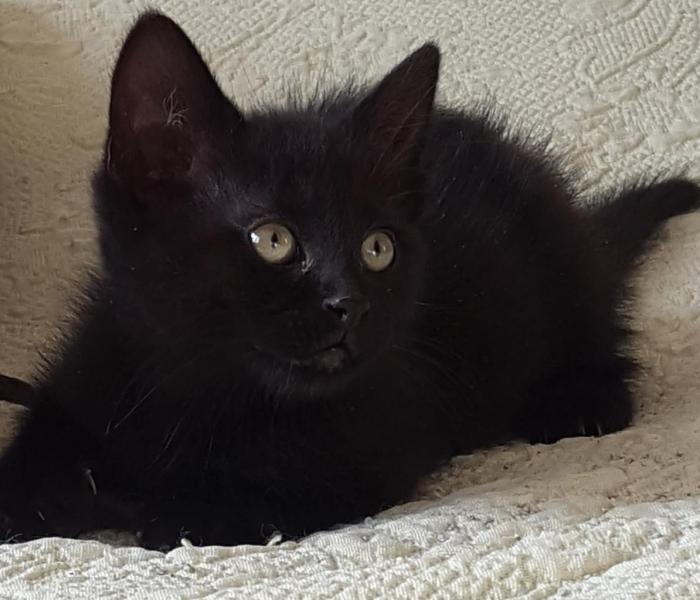 MACAO - M - Né le 15/04/2016 - Adopté en Juillet 2016