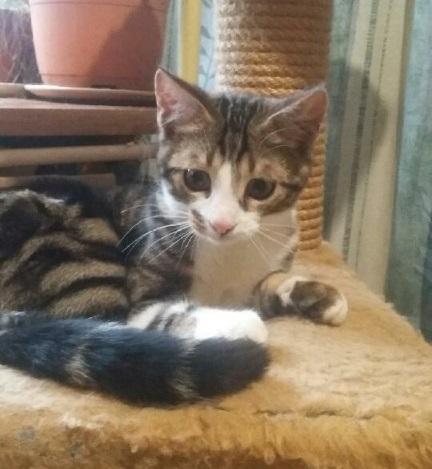 MACUMBA - M - Né le 01/09/2016 - Adopté en Mars 2017