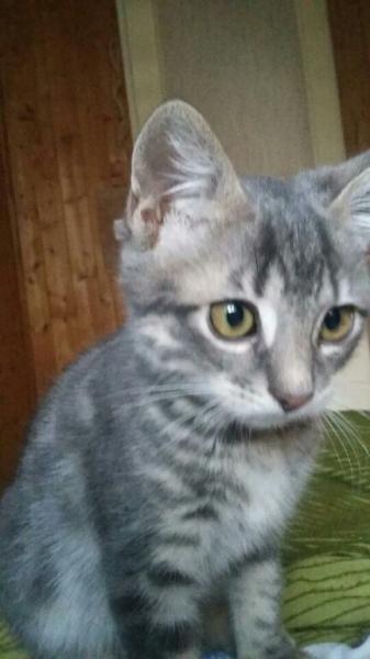 MALOU - M - Né le 25/07/2016 - Adopté en janvier 2017