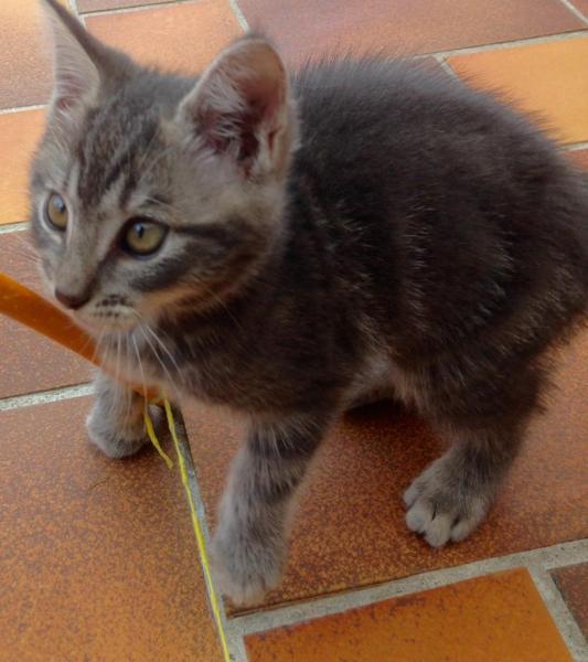 MANATHAN - M - Né le 11/03/2016 - Adopté en Juin 2016