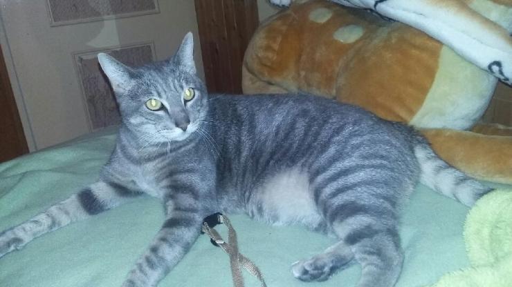 MANNY - M - Né le 01/01/2014 - Adopté en Octobre 2016