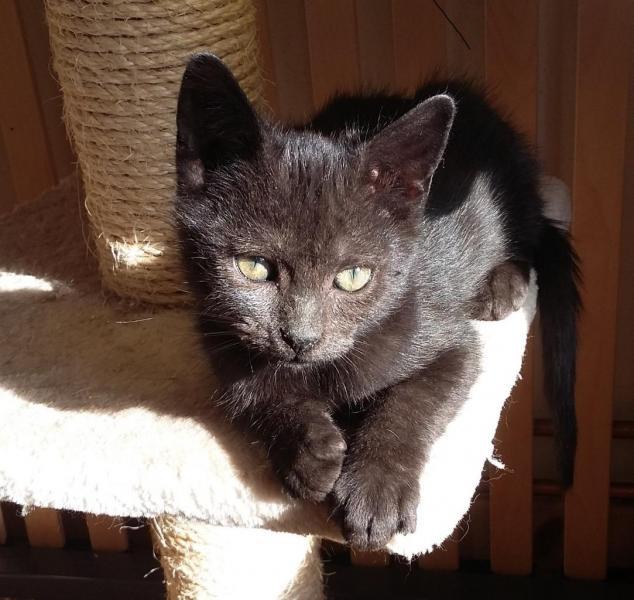 MEGH - M - Né le 01/09/2016 - Adopté en novembre 2016
