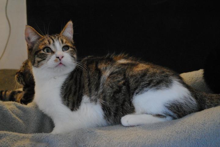 MEKONG - M - Né le 01/06/2016 - Adopté en Fevrier 2017