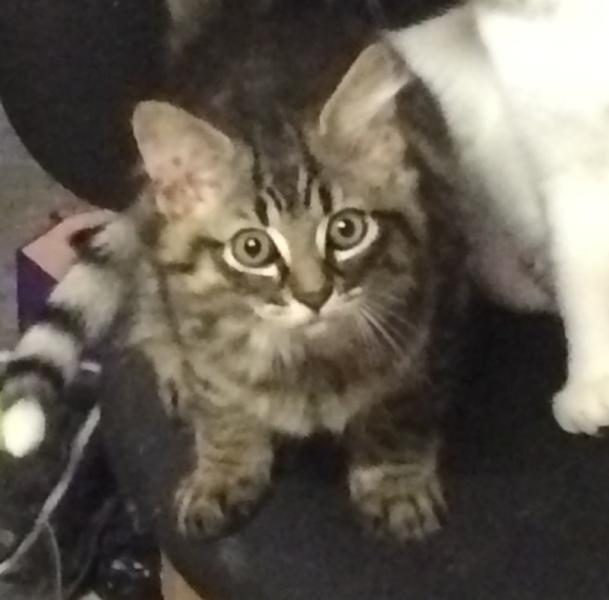 MELKIOR - M - Né le 19/06/2016 - Adopté en Septembre 2016
