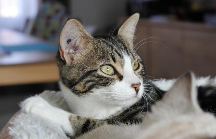 MENTALO - F - Née le 20/04/2016 - Adoptée en novembre 2016