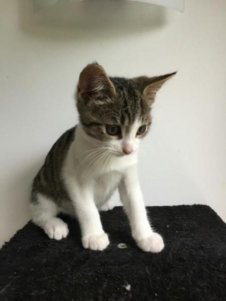 METEOR - M - Né le 23/07/2016 - Adopté en Novembre 2016
