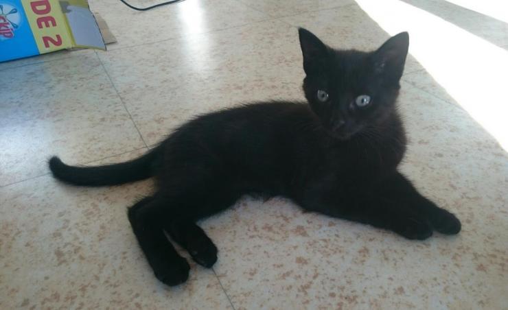 MILAN - M - Né le 20/04/2016 - Adopté en Octobre 2016