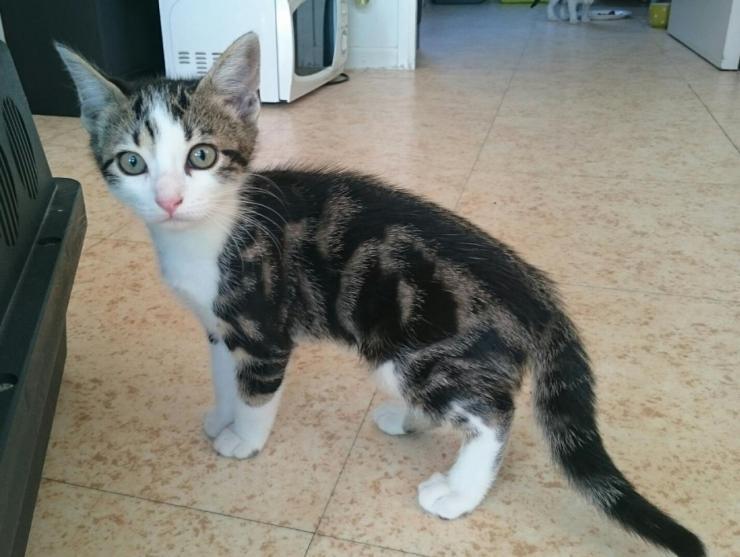 MILKA - M - Né le 20/04/2016 - Adopté en Octobre 2016