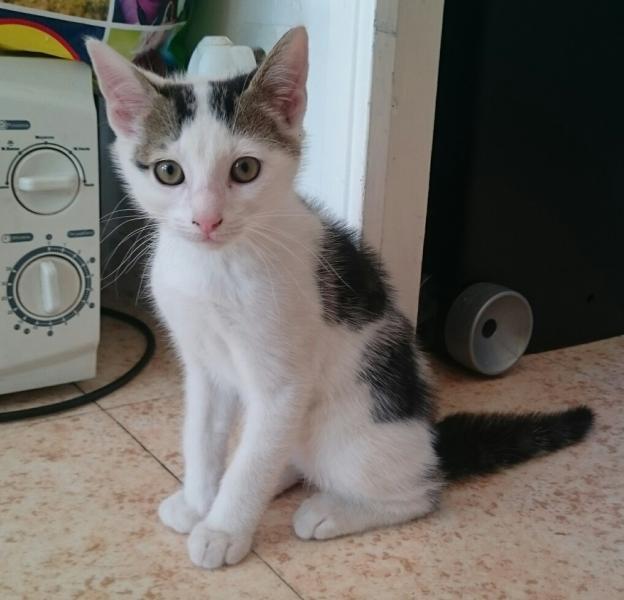 MILO - M - Né le 20/04/2016 - Adoptée en Juillet 2016