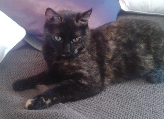 MIMOSA - F - Née le 01/04/2015 - Adoptée en Novembre 2016