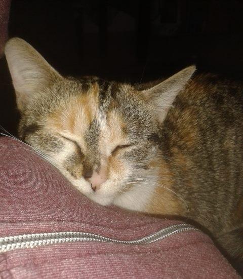 MIYAKO - F - Née le 15/09/2015 - Adoptée en novembre 2016