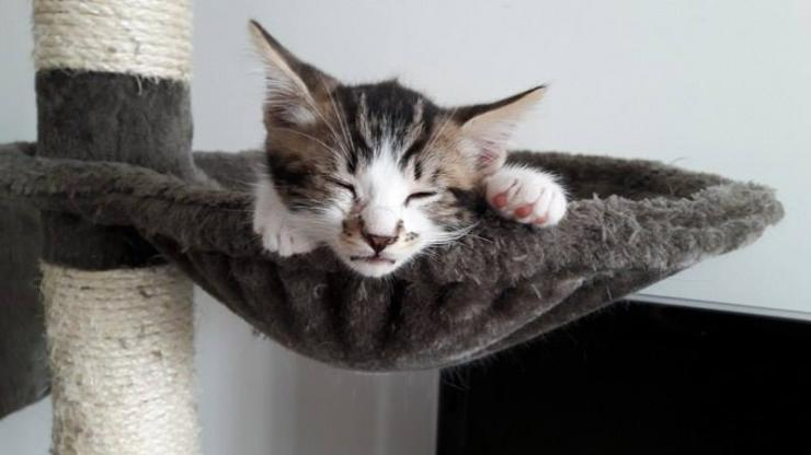 MOCHI - M - Né le 10/07/2016 - Adopté en Octobre 2016