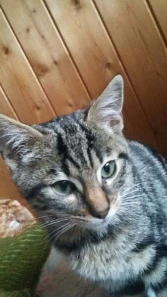 MOCKY - M - Né le 25/07/2016 - Adopté en janvier 2017