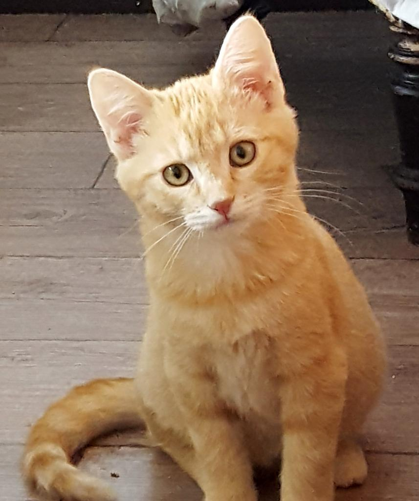 MOTUS - Né le 01/06/2016 - Adopté en janvier 2017