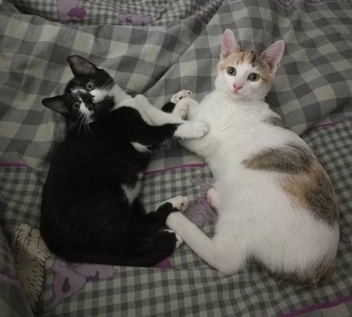 MOUFETTE et MYA - Nées le 05/08/2016 - Adoptées en Décembre 2016