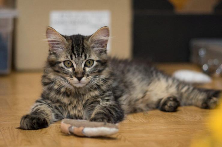 MOUSTACHE - M - Né le 14/06/2016 - Adopté en novembre 2016