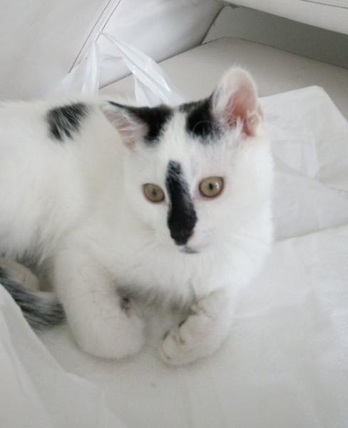 MUFFIN - M - Né le 01/05/2016 - Adopté en novembre 2016